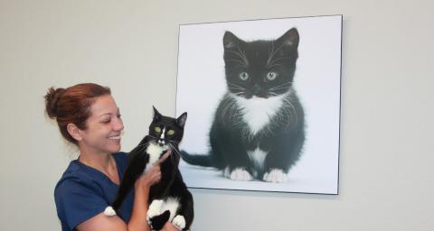 feline leukemia positive cat lone star animal hospital