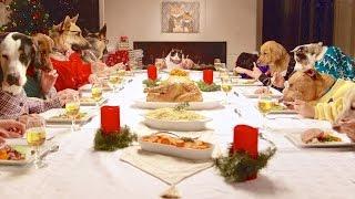 Holiday Dinner Pet Tips
