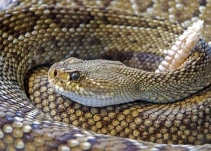 Snake Bites and how to avoid them - from Lonestar Vet Clinic