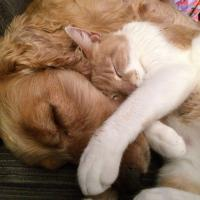 cat and dog acupuncture in dripping springs tx