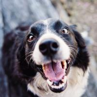 Dog Dental Services