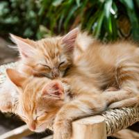Dripping Springs TX kitten wellness plans