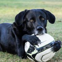 Dog and Cat Pain Management Services