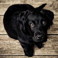 Puppy Wellness Care