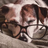 Senior Dog Care in Dripping Springs, TX
